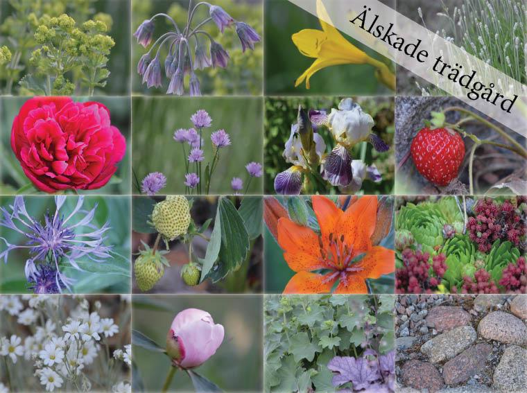 Blommor i trädgården - kollage