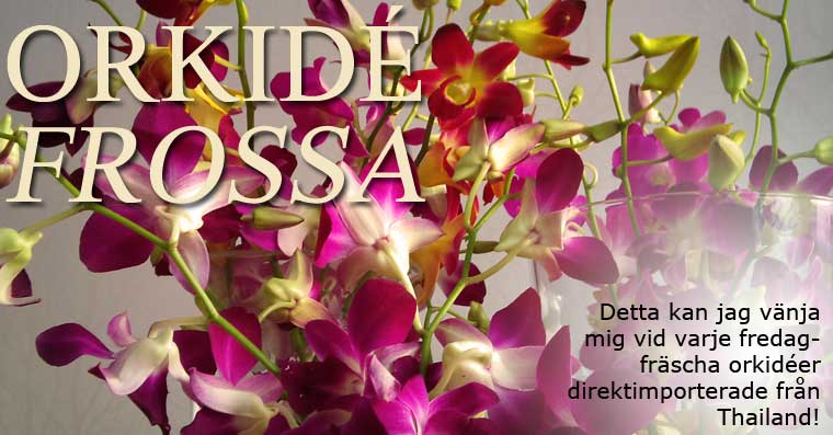 Massor av orkideer
